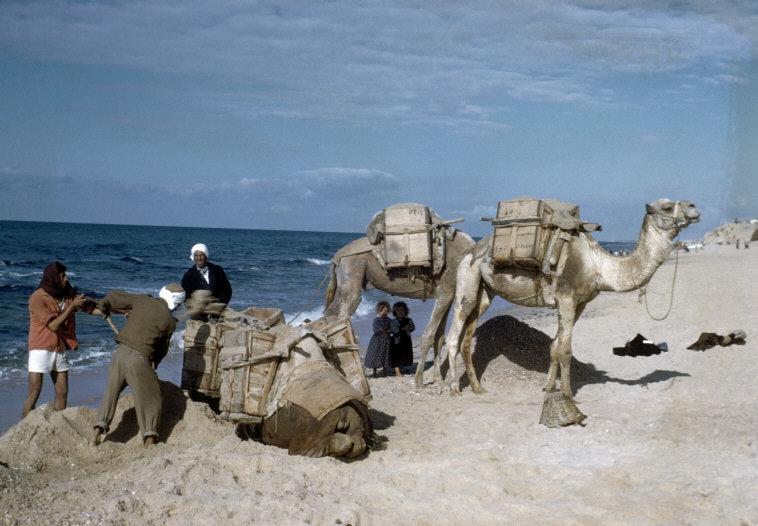 مخيّم الشاطي 1960